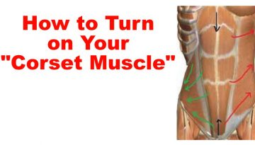 corset muscle