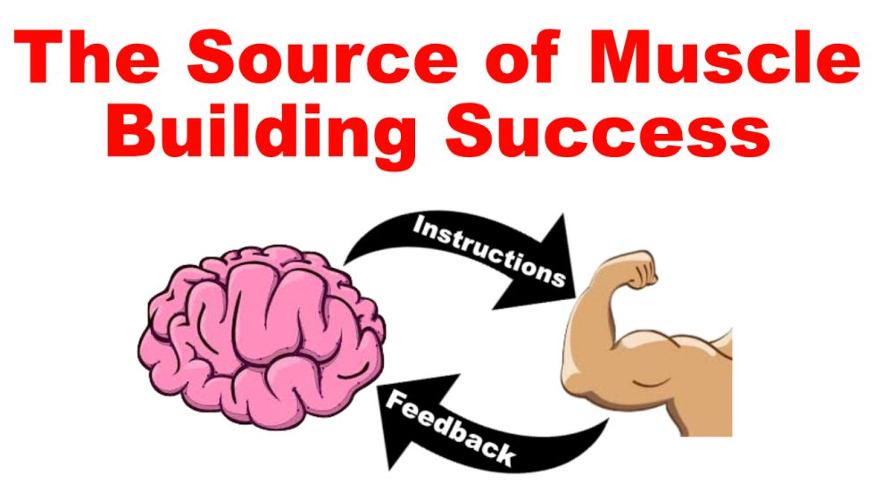 muscle building success