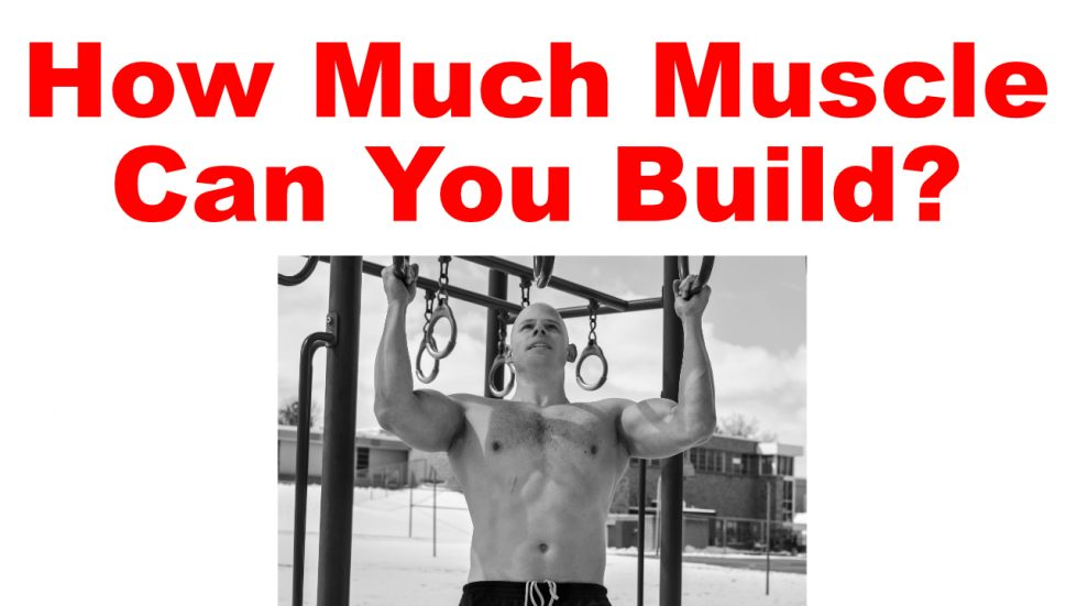 how much muscle can you build?