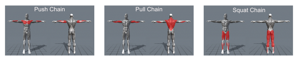 movement chains chain training