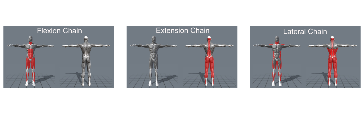 chain training support chains